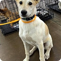 Adopt A Pet :: Huxley - Arlington, TX