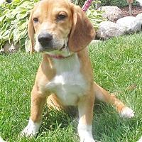 Adopt A Pet :: Woodville - West Chicago, IL