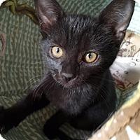 Adopt A Pet :: Jetta - Millersville, MD