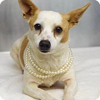 Adopt A Pet :: Roo - Dublin, CA