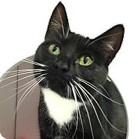Adopt A Pet :: Baby - Colorado Springs, CO