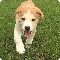 Adopt A Pet :: Jet - Goldsboro, NC