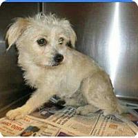 Adopt A Pet :: Lola - Leduc, AB