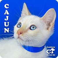 Adopt A Pet :: Cajun - Carencro, LA