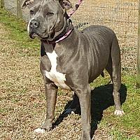 Adopt A Pet :: Maggie - Newport, NC
