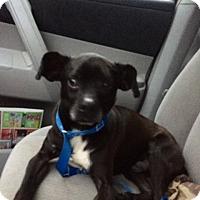 Adopt A Pet :: Lake - Christiana, TN