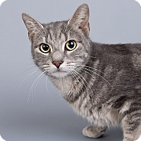 Adopt A Pet :: Confetti Cake - Wilmington, DE
