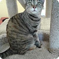 Adopt A Pet :: Coco - Lake Charles, LA