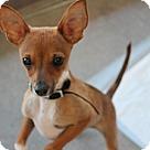 Adopt A Pet :: Lucas