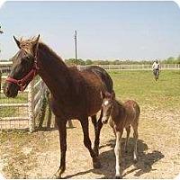 Adopt A Pet :: Aspen - Kaufman, TX
