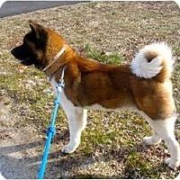 Adopt A Pet :: Makoto - East Amherst, NY