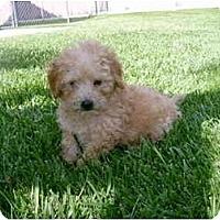 Adopt A Pet :: Shelby - La Costa, CA