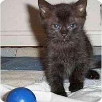 Adopt A Pet :: Camille - Reston, VA