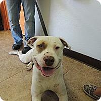Adopt A Pet :: Howie - Houston, TX