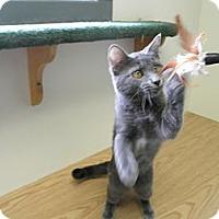 Adopt A Pet :: Foxey Baby - Milwaukee, WI