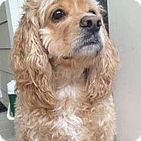 Adopt A Pet :: Charlie - Sugarland, TX