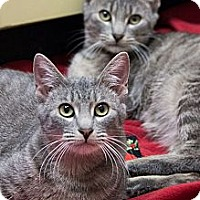 Adopt A Pet :: Pee Wee and Stripes - Chicago, IL
