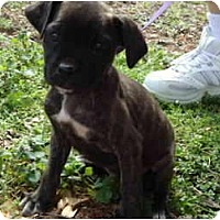 Adopt A Pet :: Jacobi - Allentown, PA