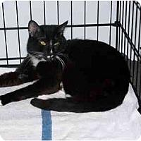 Adopt A Pet :: Ian - Syracuse, NY
