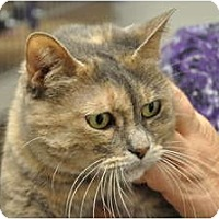 Adopt A Pet :: Trinity - Foothill Ranch, CA