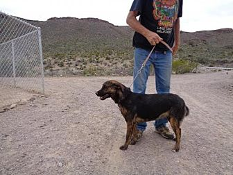 Hound (Unknown Type) Mix Dog for adoption in Golden Valley, Arizona - Jamocha