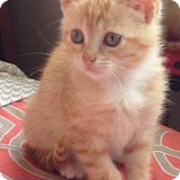 Adopt A Pet :: Olivia - Metairie, LA