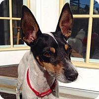 Adopt A Pet :: Henderson (WA) - Seattle, WA