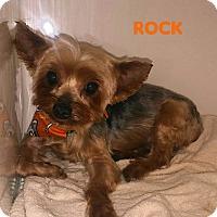Adopt A Pet :: Rock - House Springs, MO
