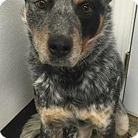 Adopt A Pet :: Paxton - Texico, IL