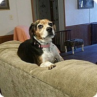 Adopt A Pet :: Allie - Harmony, Glocester, RI