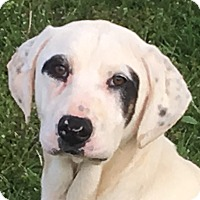 Adopt A Pet :: Bandit - Staunton, VA