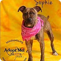 Adopt A Pet :: Sophie - Topeka, KS