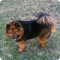 Adopt A Pet :: Reina - Lodi, CA