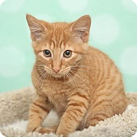 Adopt A Pet :: Ron - Chippewa Falls, WI