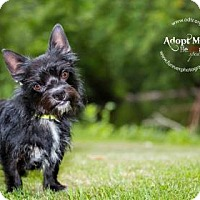 Adopt A Pet :: Max - Warsaw, IN