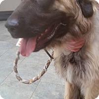 Adopt A Pet :: Hodor/pending - Hillside, IL