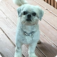 Adopt A Pet :: Toby - Atlanta, GA