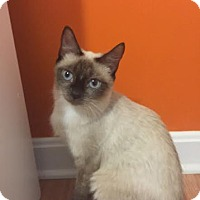 Adopt A Pet :: Jazzy - Concord, NC