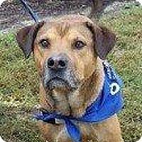 Adopt A Pet :: BARNEY - Hampton, VA