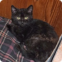Adopt A Pet :: Cookie - Salem, OR