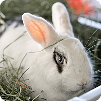 Adopt A Pet :: Alonzo - Montclair, CA
