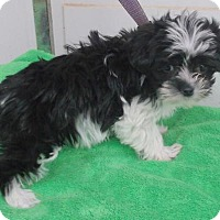Adopt A Pet :: Patty - Birch Tree, MO