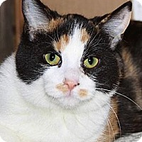Calico Cat for adoption in Eldora, Iowa - Candi
