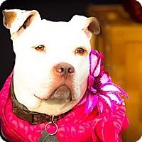 Adopt A Pet :: Bianca - Freeport, NY