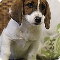 Adopt A Pet :: Tiffer - Wytheville, VA