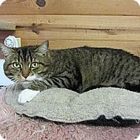 Adopt A Pet :: Bea - Kingston, WA