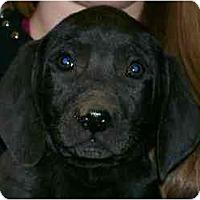 Adopt A Pet :: Calvin - Cumming, GA