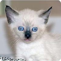 Adopt A Pet :: Bailey - La Jolla, CA