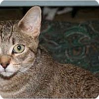 Adopt A Pet :: Mimi - Montreal, QC