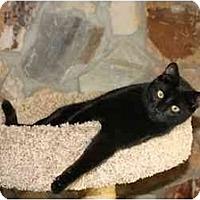 Adopt A Pet :: Magnum - Bonita Springs, FL
